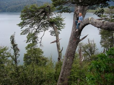 in a tree near San Martin de los Andes