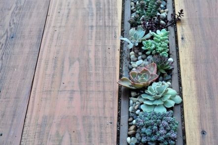 succulent table