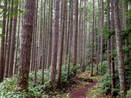 Brink Trail
