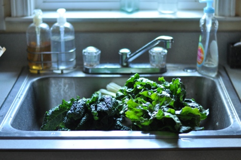 washing kale in the sink